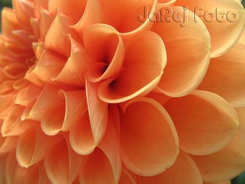Oranžový detail