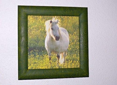 Obrázek bílý kůň