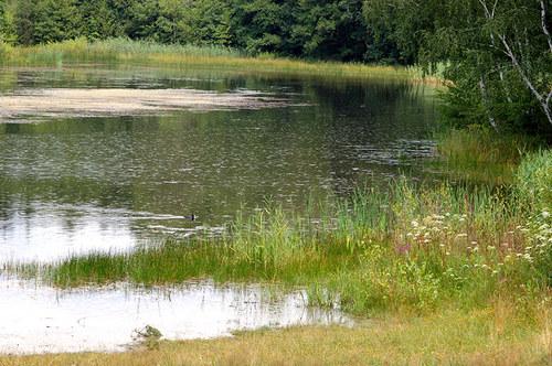 Prší do rybníka