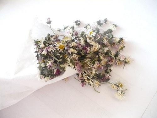 Sedmikráska - květ 5g