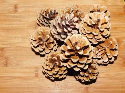 šišky borovice černé