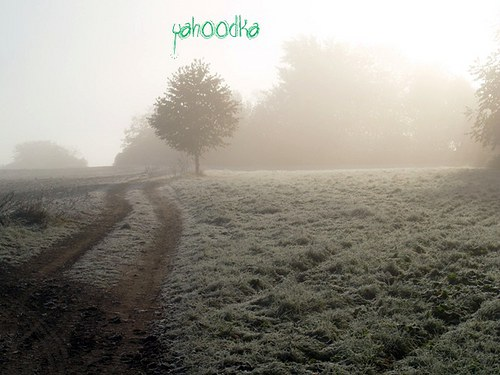 Krajina posedlá mlhou