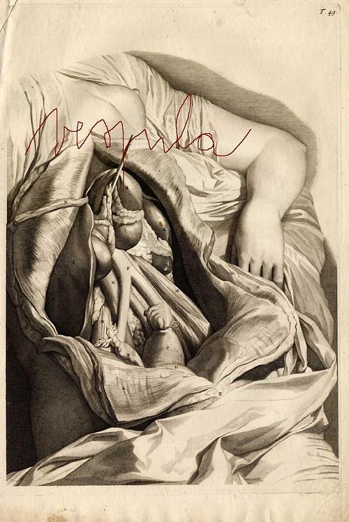 Anatomie, játra