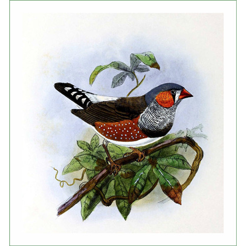 ptáček (18)  (látkový panel)