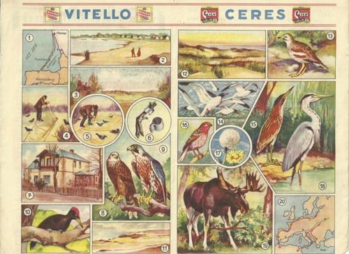 Reklamní okénko pro děti Tah ptáků