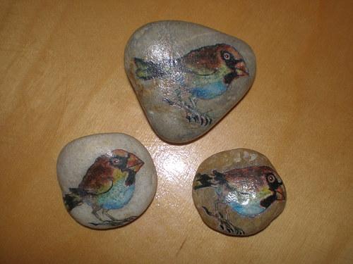 Ptačí trio