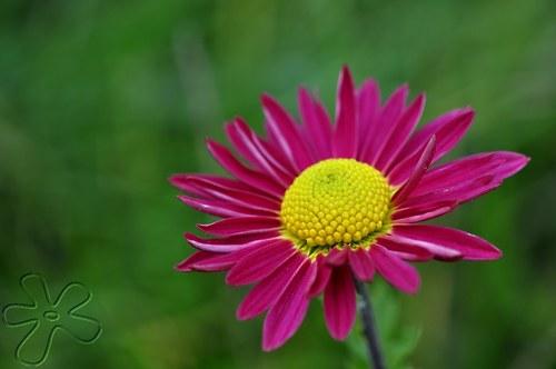 Květ podzimu