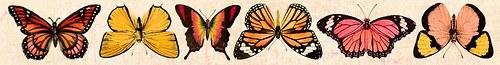 Oboustranný Papírový pásek - motýli Tropical