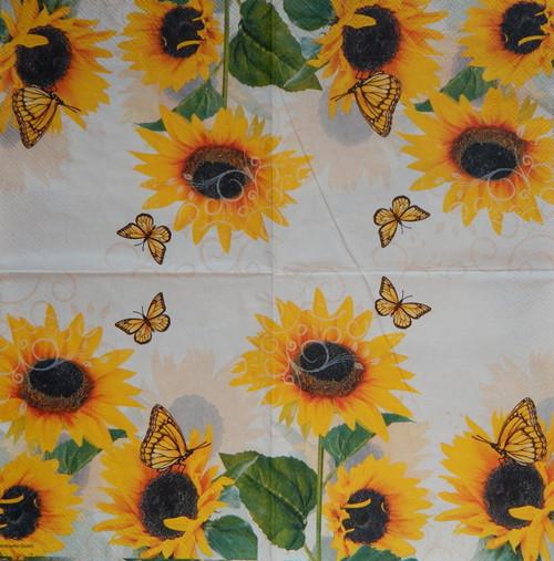Motýlci na slunečnicích  875