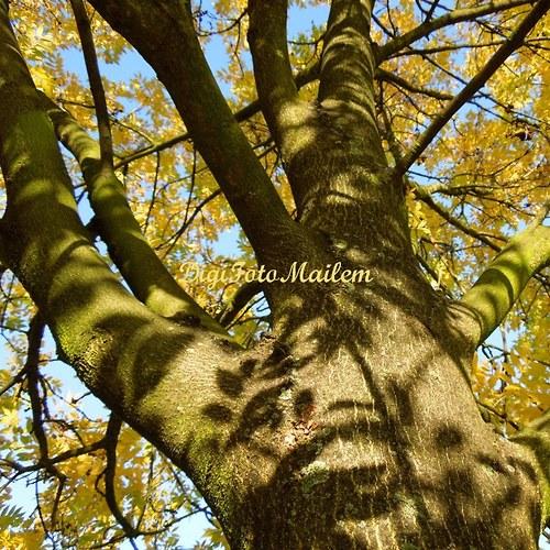 Strom v podzimním hávu VII