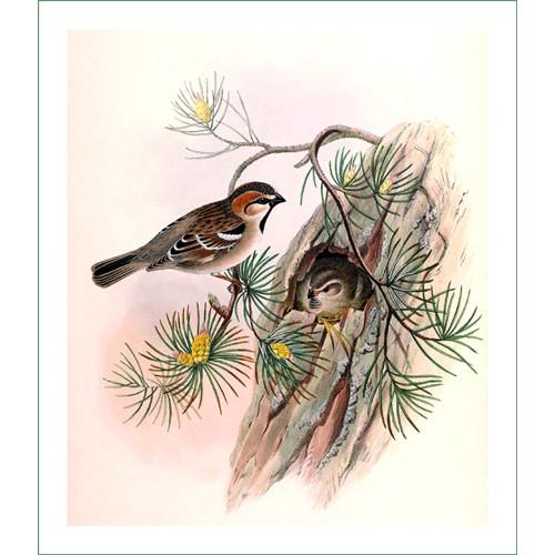 ptáci (29) - H.C.Richter  (látkový panel)