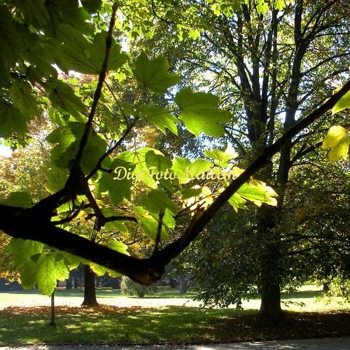 Čarokrásné mámení podzimu I