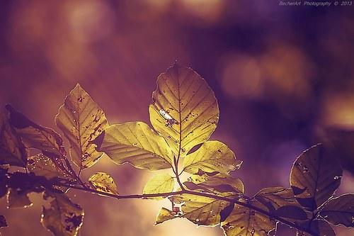 Autumn Harmony V