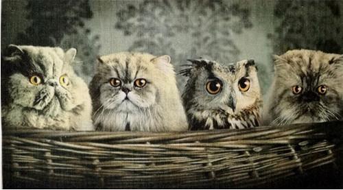 """Látkový panel 100% bavlna \""""Kočky a sova\"""""""