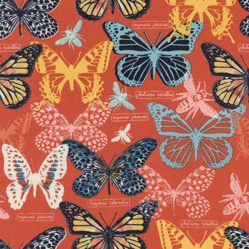 Toccata motýli