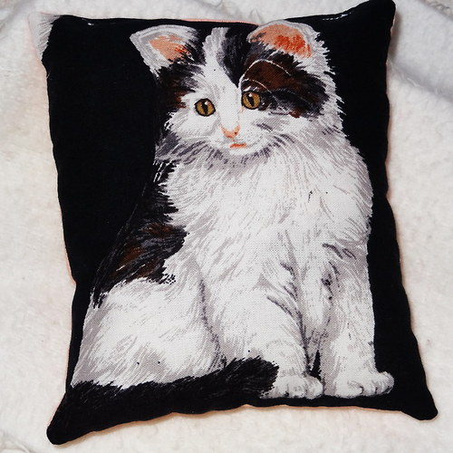 Levandulová kočka Amanda