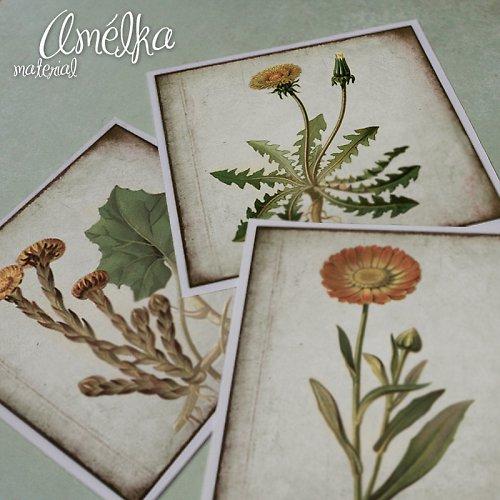 Nažehlovačky z Botanického atlasu - sada 4