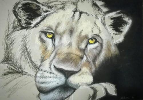 Lev ležící, ale ne spící