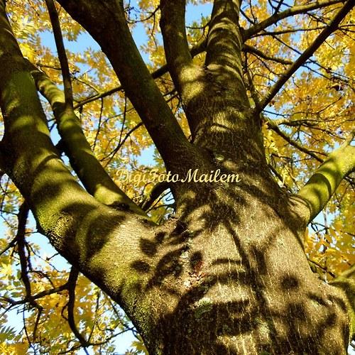 Strom v podzimním hávu VIII