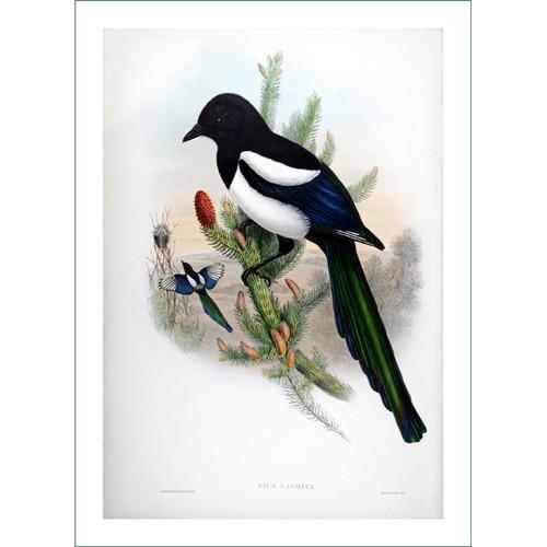 ptáci (26) - H.C.Richter  (látkový panel)