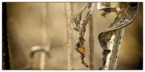 Můj nový Botanicus - fotografie 40x20 cm