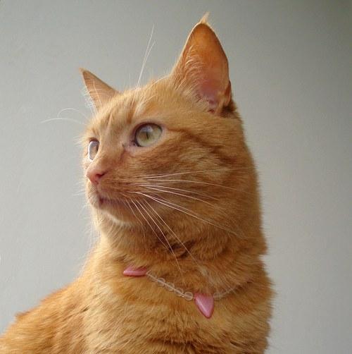 Kočičí srdíčkový náhrdelník