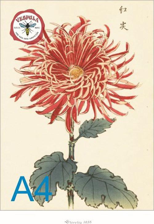 obrázky, květiny