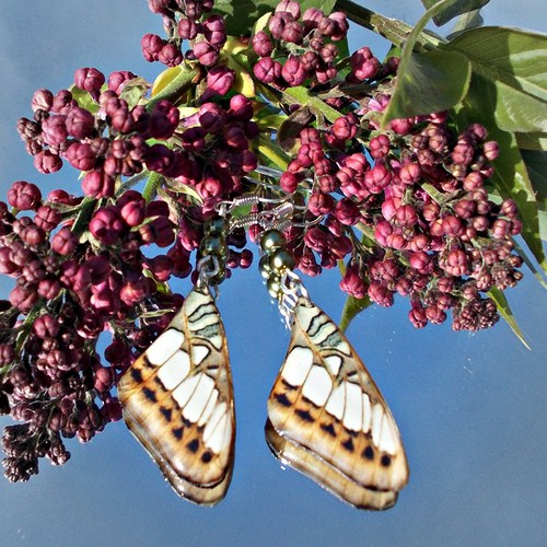 Náušnice motýl - mot52