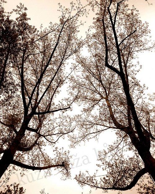 podzimní milenci