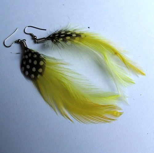 Žluto-černá peříčka