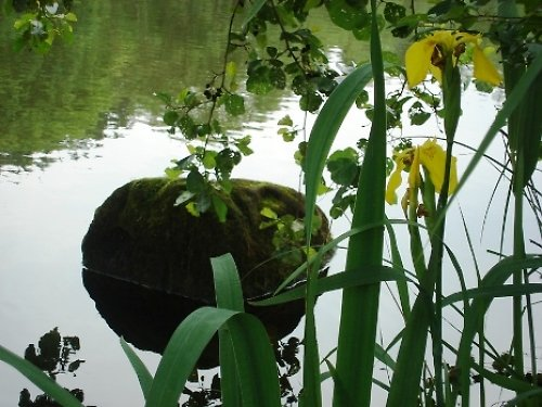 U rybníka v Českém Ráji
