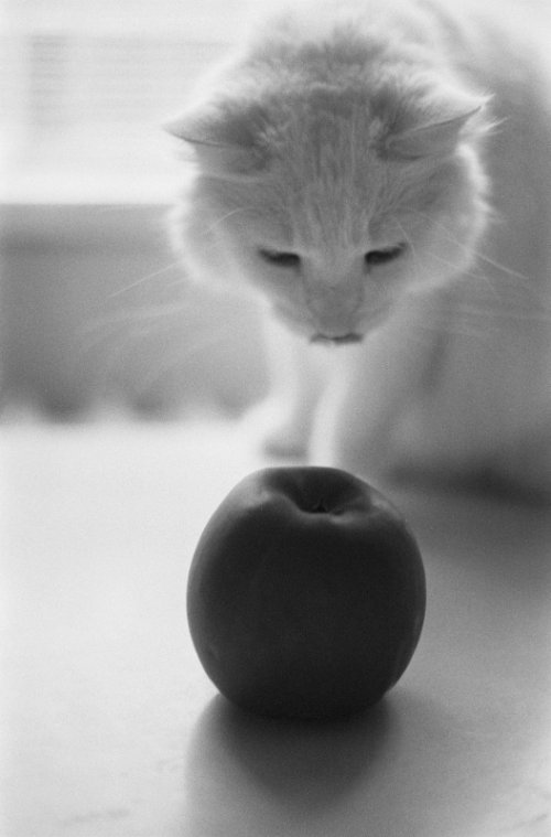 ...cat me if you can II. ...