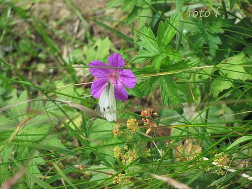 Motýl a květ