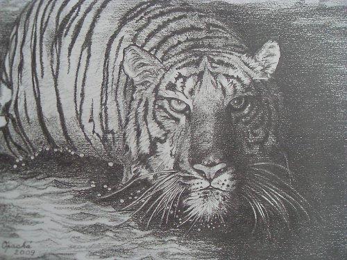 Objednávky kreseb - maleb:Tygří koupel