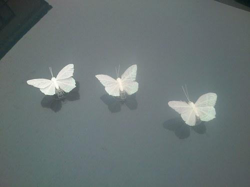 svatební motýlci na kapotu