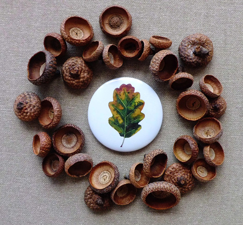 Quercus robur. Magnet 56mm.