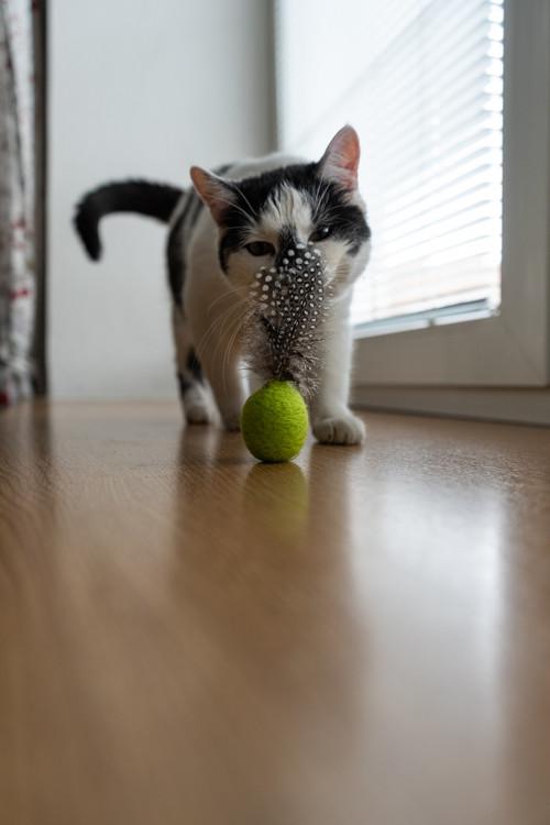 Hračka pro kočku s peříčky a kozlíkem - zelená