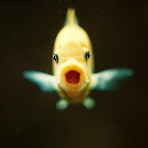 ...ryba, která řvala...