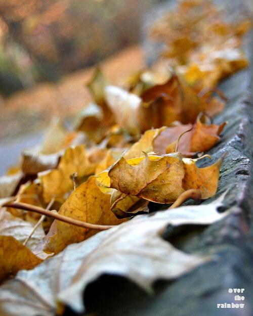 124. Autumn Impressions IV