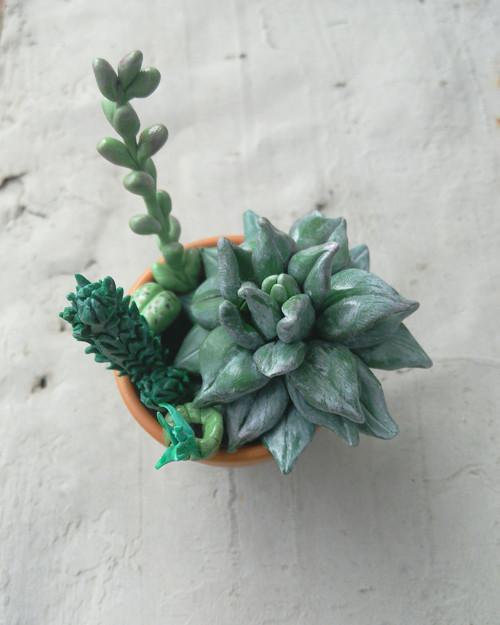 Kytka pro ty kterým chcipne i kaktus ☻☺
