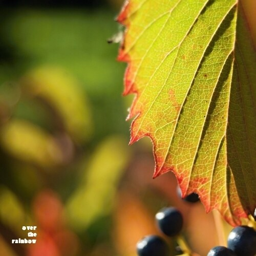 Autumn Impressions V - autorská fotografie, Giclée