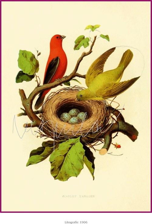 Hnízda s ptáčky