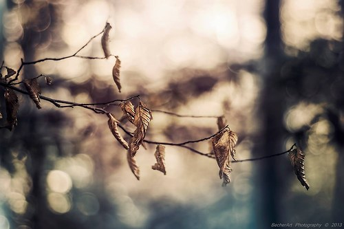 Autumn Harmony VI