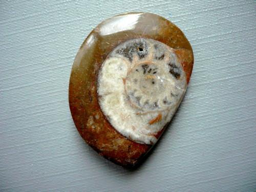 Amonit v matečné hornině 34 mm, č.31