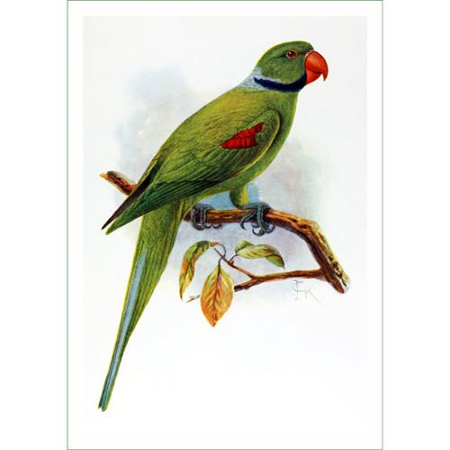 papoušek (12) - J.G.Keulemans  (látkový panel)