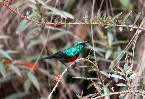 Drahokam z pohoří Virunga