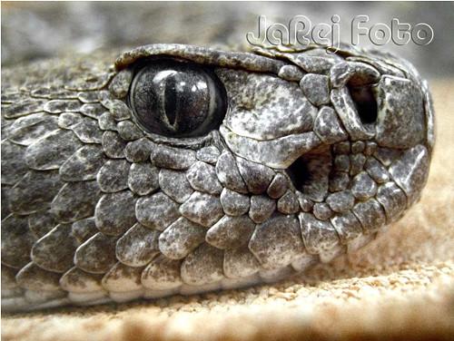Hadí pohled