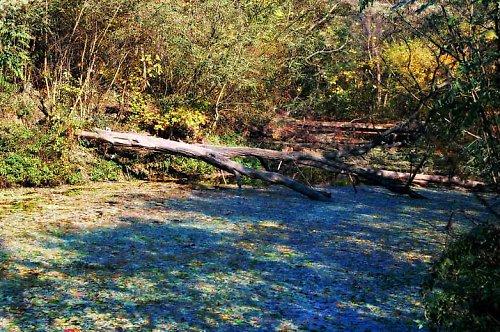 Podzimní kaše se valí řekou