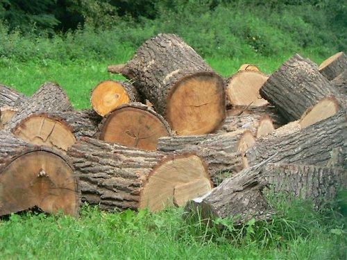 Krása dřeva