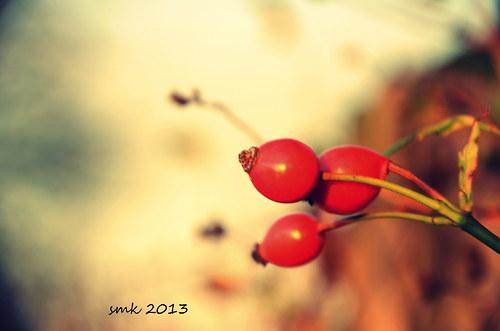 Šípky II.  - autorská fotografie